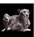 ChallengeIT_Gepard.png