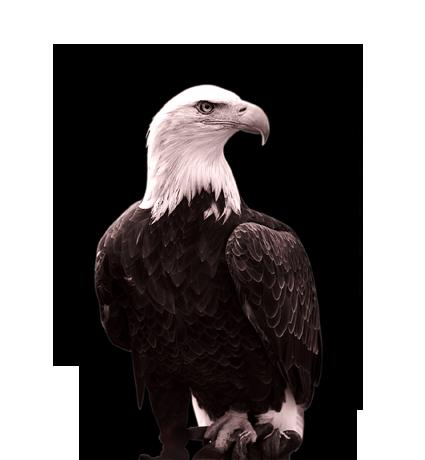 Deutscher Adler Png